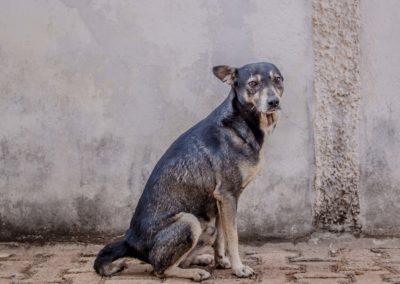 Piment, chien de garde
